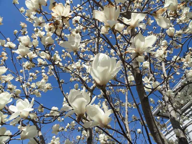 http://www.aqu-aca.com/masblog/DSC01046web.jpg