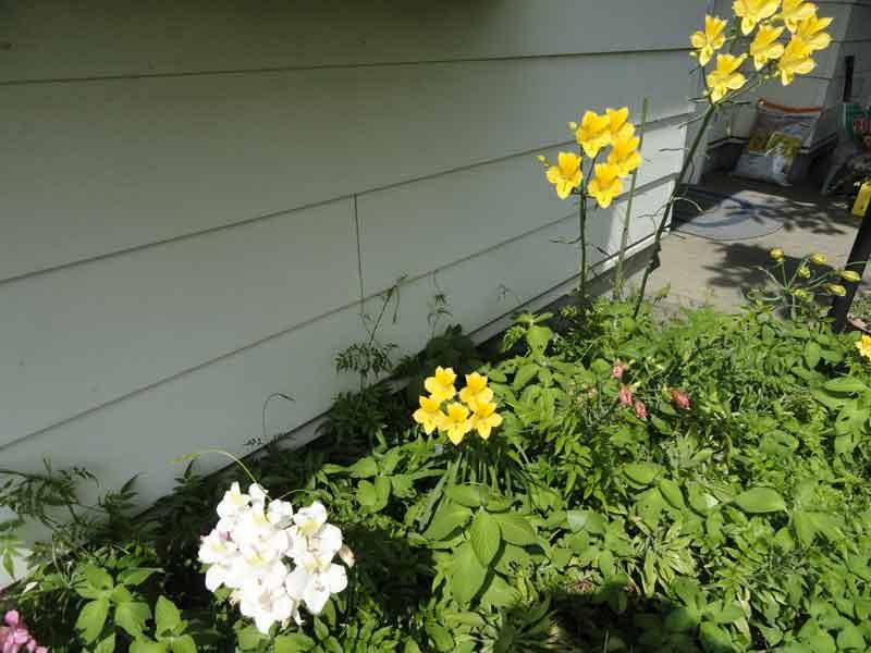 http://www.aqu-aca.com/masblog/DSC02255web.jpg