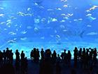 2021年 癒しと再生の沖縄セミナー